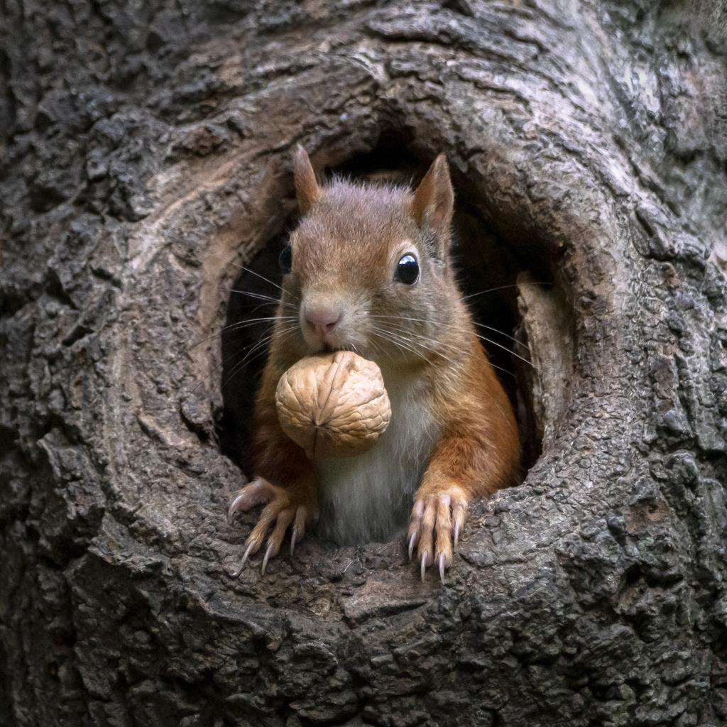 Curiosidades de las ardillas